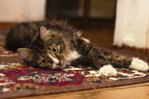Carpet Care Tips for Pet Owners